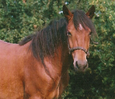 Folly the horse